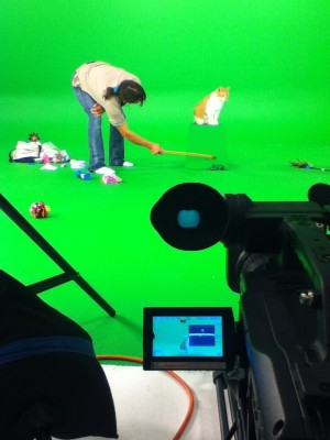 Cats who don't care about your toy on green screen
